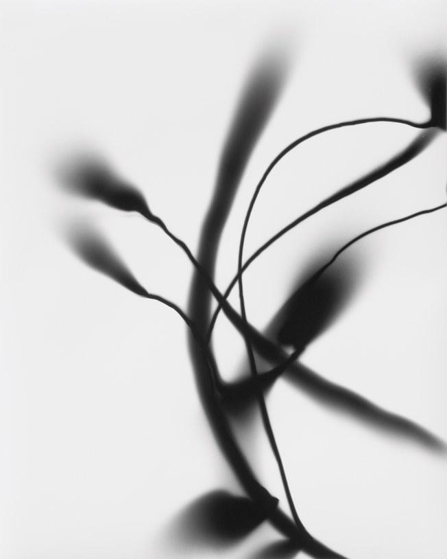 """photo of Gustav Metzger's """"Light Drawings"""""""